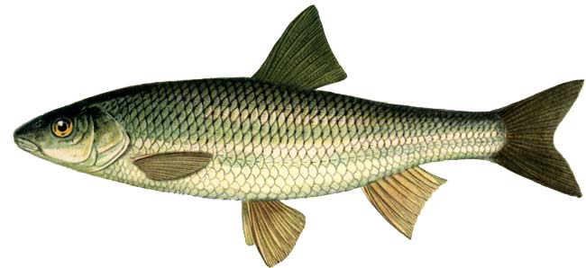 При ловле елец требует от рыболова не только умения, но и